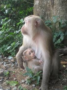 Baby monkey feeding!