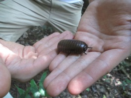 LOOK AT THIS ROLLIE POLLIE!