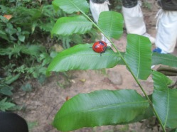 Look at this ladybug!
